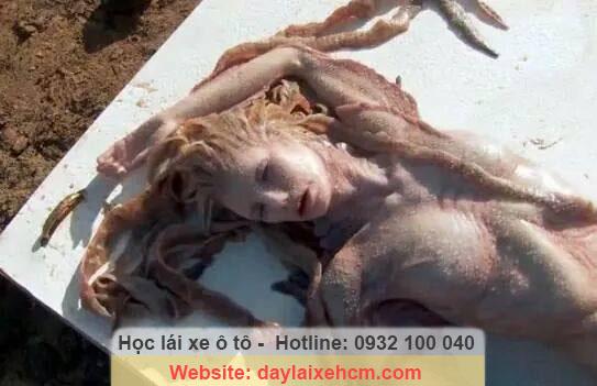 Tuy nhiên, sau đó người ta đã chứng minh được hình ảnh xác nàng tiên cá này thực ra chỉ là dàn dựng và nàng tiên cá cũng chỉ là... một tác phẩm nghệ thuật.